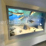 a_propunere-muzeul-antipa-arhitect-tudor-popa-11