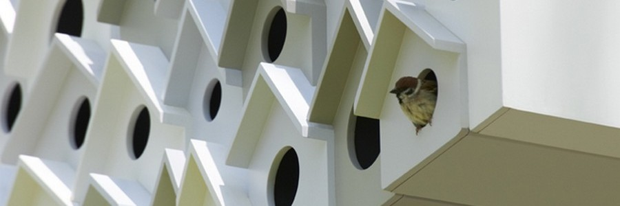 Bird apartment