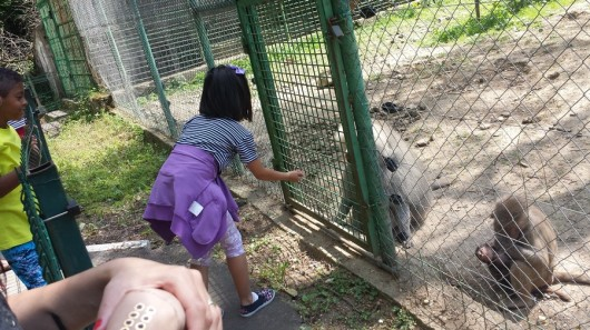 foto gradina zoologica sibiu_03