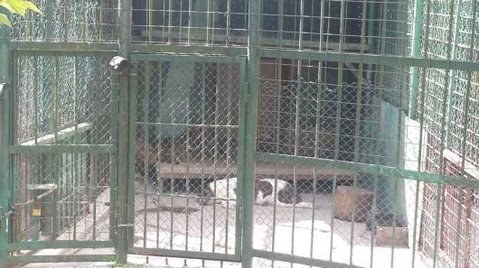 foto gradina zoologica sibiu_04